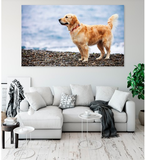 Painel Fotográfico Cachorro